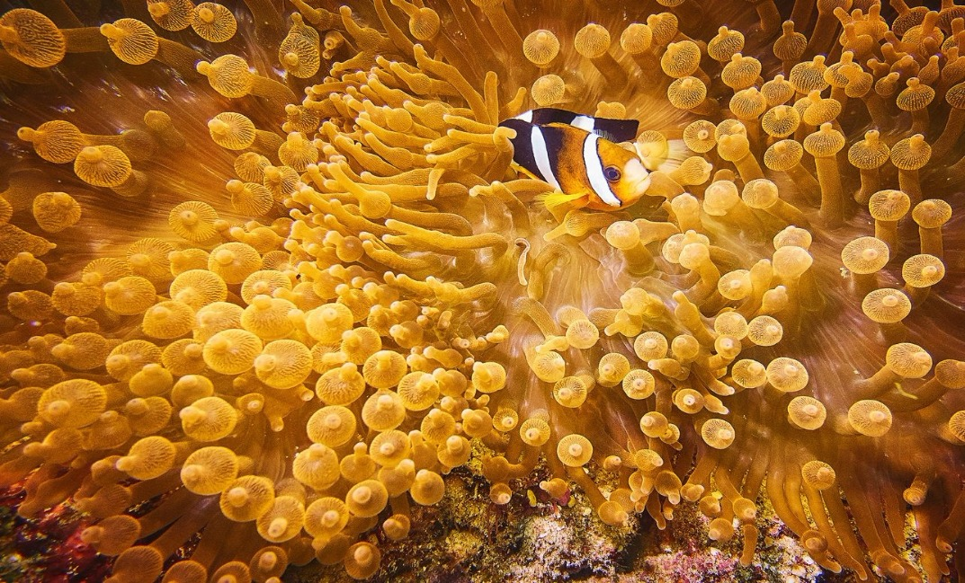 Rohan Shrestha's photography series of Raja Ampat's marine life.