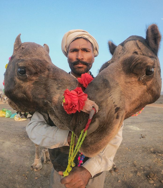 Travel photographer Harmeet Singh photographs Pushkar mela, one of India's largest camel, horse and cattle fairs.